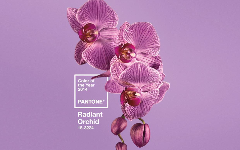 Color Series 3 : Radiant Orchid Pistachio Color Series 3 : Radiant Orchid Pistachio new images